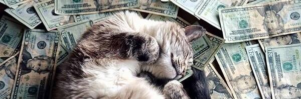 Кот в деньгах